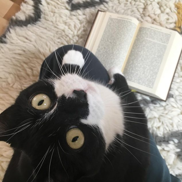 Odette the black and white cat looks up at camera and reads a book